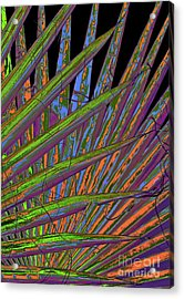 Palm Meanings Acrylic Print by Gwyn Newcombe