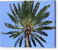 Palm Acrylic Print by Mindy Newman