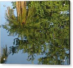 Palm Mirror Acrylic Print by Florene Welebny