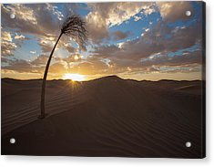 Palm On Dune Acrylic Print