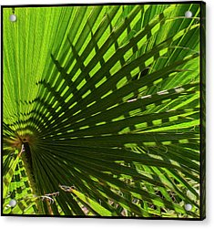 Acrylic Print featuring the photograph Palm Pattern No.1 by Mark Myhaver