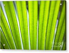 Palm Patterns Macro Acrylic Print