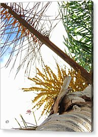 Acrylic Print featuring the photograph Palm Sky View by Linda Hollis