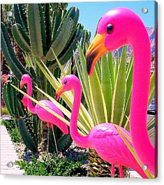 Palm Springs Flamingos 7 Acrylic Print by Randall Weidner