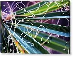 Palm Strings Acrylic Print by John Glass