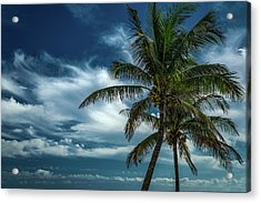 Palm Tree Against The Sky Acrylic Print