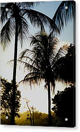 Palm Tree Acrylic Print by Amarildo Correa