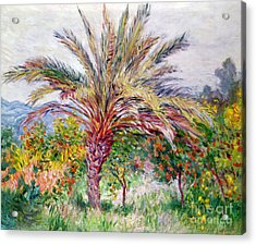 Palm Tree At Bordighera Acrylic Print by Claude Monet