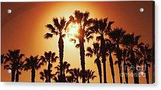 Palm Tree Dreams Acrylic Print
