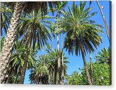 Palm Tree Forest Acrylic Print by Jera Sky