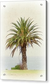 Palm Tree In Coastal California In A Retro Style Acrylic Print