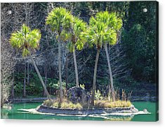 Acrylic Print featuring the photograph Palm Tree Island by Raphael Lopez