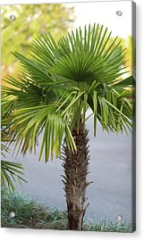 Acrylic Print featuring the photograph Palm Tree Just There by Raphael Lopez