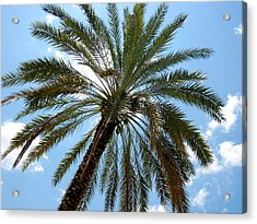 Palm Tree Acrylic Print by Michael Albright