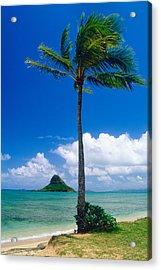 Palm Tree On The Beach Kaneohe Bay Oahu Hawaii Acrylic Print by George Oze