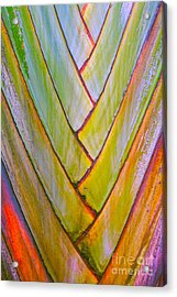 Palm Tree Pattern Acrylic Print by Todd Breitling