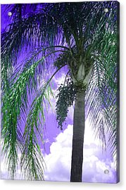 Acrylic Print featuring the photograph Palm Tree Seeding by Rosalie Scanlon