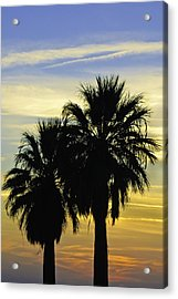 Acrylic Print featuring the photograph Palm Tree Silhouette by Sherri Meyer