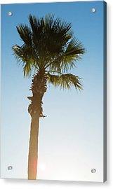Palm Tree Sunrise Acrylic Print by Steve Gadomski