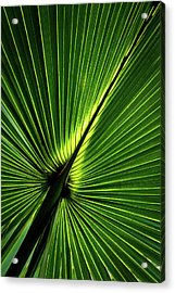 Palm Tree With Back-light Acrylic Print