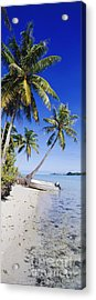 Palm Trees And Motorized Dinghy Acrylic Print by Jeremy Woodhouse