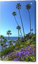 Acrylic Print featuring the photograph Palm Trees At Heisler Park by Cliff Wassmann
