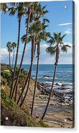 Acrylic Print featuring the photograph Palm Trees At Monument Point Laguna Beach by Cliff Wassmann