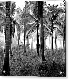 Acrylic Print featuring the photograph Palm Trees - Black And White by Marianna Mills