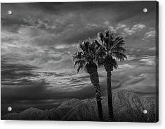 Acrylic Print featuring the photograph Palm Trees By Borrego Springs In Black And White by Randall Nyhof