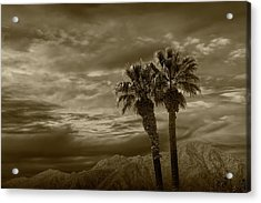 Acrylic Print featuring the photograph Palm Trees By Borrego Springs In Sepia Tone by Randall Nyhof