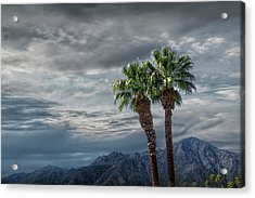 Acrylic Print featuring the photograph Palm Trees By Borrego Springs In The Anza-borrego Desert State Park by Randall Nyhof