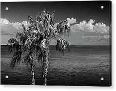 Palm Trees In Black And White At Laguna Beach Acrylic Print by Randall Nyhof