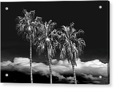 Acrylic Print featuring the photograph Palm Trees In Black And White On Cabrillo Beach by Randall Nyhof