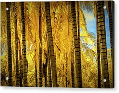 Palm Trees In Infrared At The Huntington Library Acrylic Print by Randall Nyhof