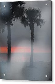 Palm Trees In The Fog Acrylic Print by Penfield Hondros