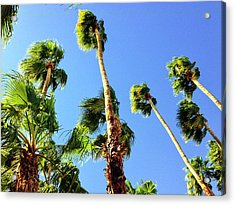 Palm Trees Looking Up Acrylic Print