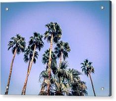 Palm Trees Palm Springs Summer Acrylic Print