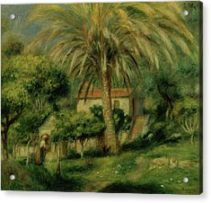 Palm Trees Acrylic Print by Pierre Auguste Renoir
