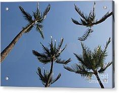 Acrylic Print featuring the photograph Palm Trees by Wilko Van de Kamp