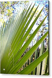 Acrylic Print featuring the painting Palmetto 1 by Renate Nadi Wesley
