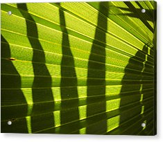 Acrylic Print featuring the photograph Palmetto 4 by Renate Nadi Wesley