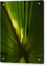 Palmetto Embrace Acrylic Print by Marvin Spates