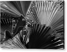 Palmetto In Black And White Acrylic Print