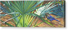 Palmettos And Stellars Blue Acrylic Print by Marguerite Chadwick-Juner