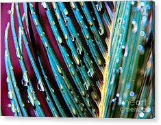 Palms After A Rainy Day Acrylic Print by Mariola Bitner