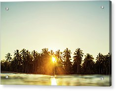 Palms And Rays Acrylic Print