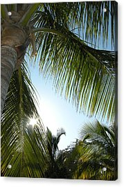Palms Acrylic Print by Audrey Venute