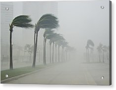 Palms Blow In 100 Mile-per-hour Winds Acrylic Print by Mike Theiss