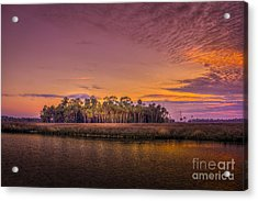 Palms Delight Acrylic Print by Marvin Spates