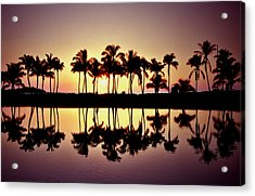 Palms In Silhouette Acrylic Print by Michael  Cryer